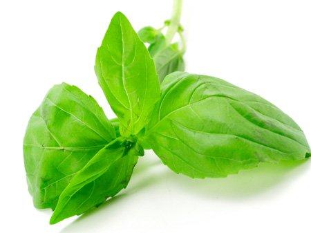 Basil Organic (Ocimum basilicum L)