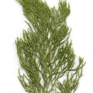 Australian Blue Cypress Essential Oil