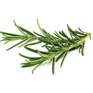 Rosemary Organic essential oil Rosmarinus Officinalis
