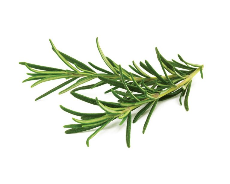 Rosemary Organic essential oil Rosmarinus Officinalis