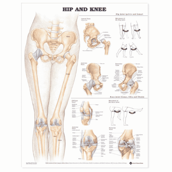 Hip and Knee Chart